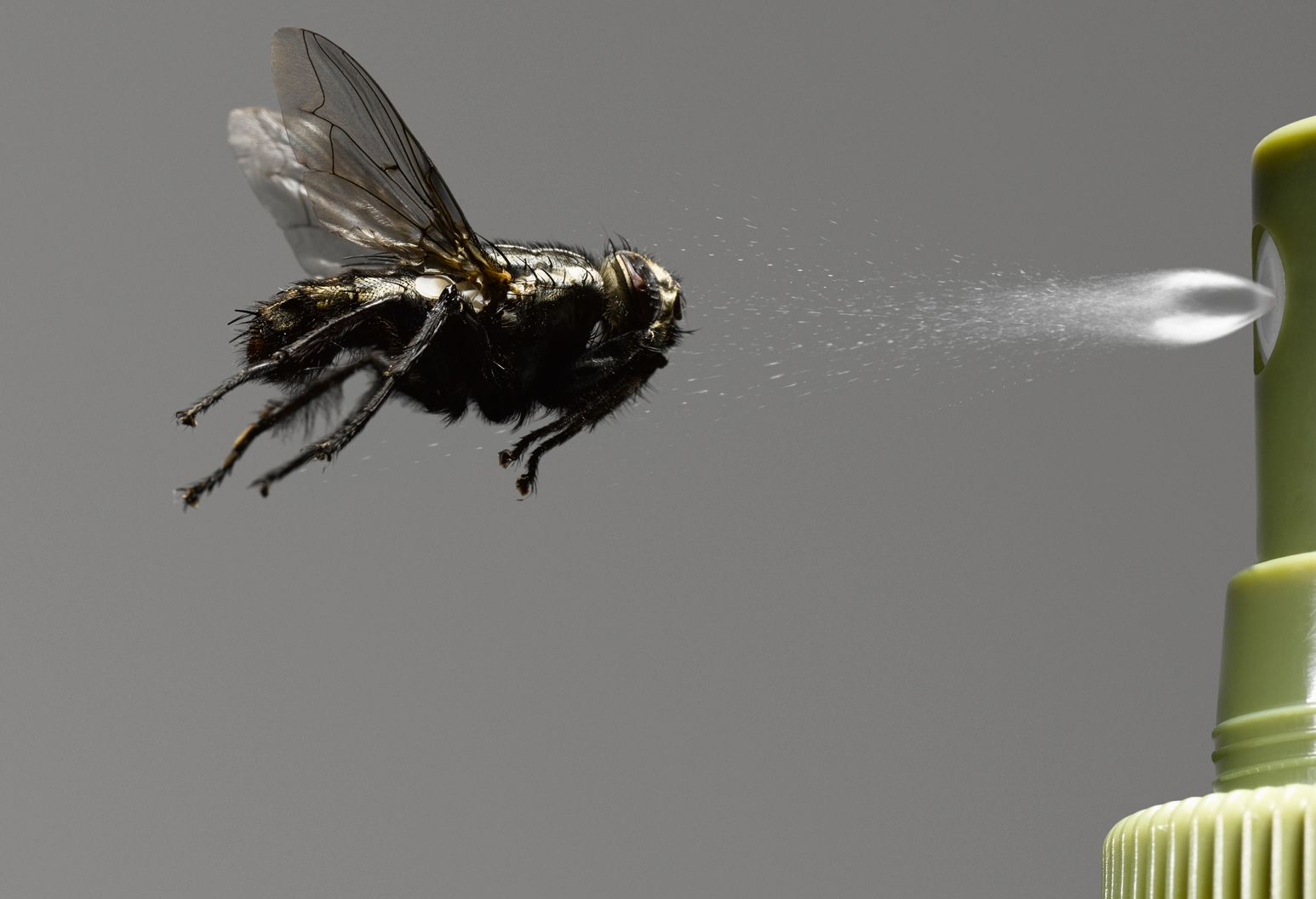A winged insect is flying towards a green spray nozzle shooting out a clear liquid.