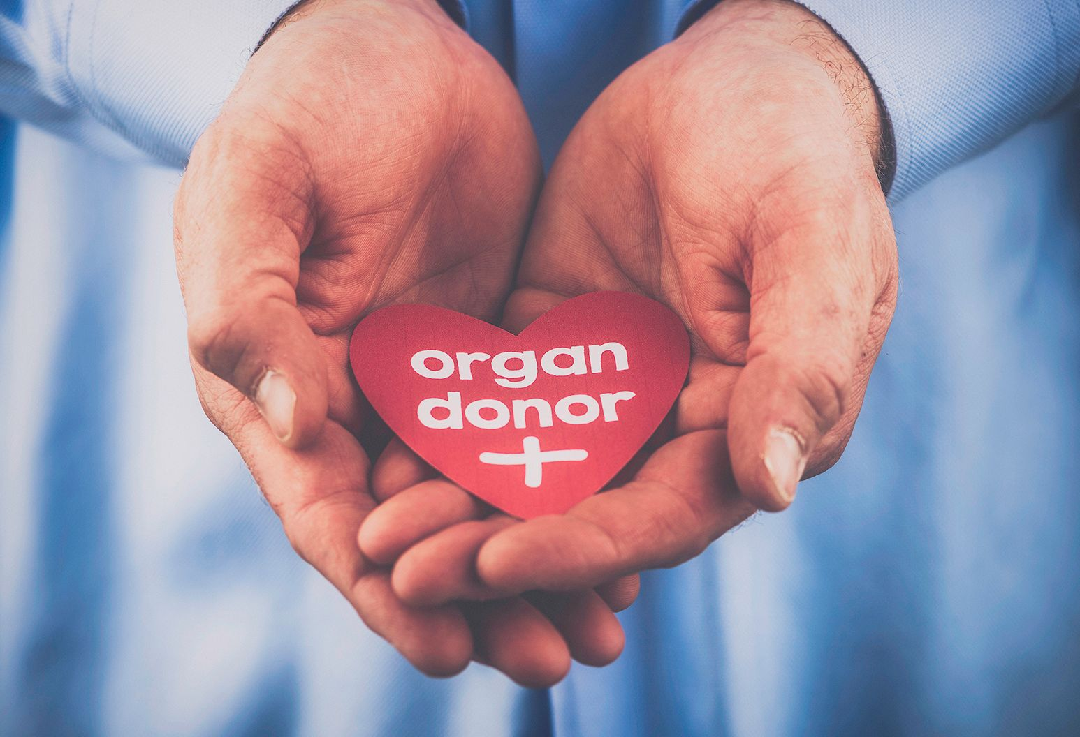 Two hands hold a red cut out of a heart with the words organ donor written in white.
