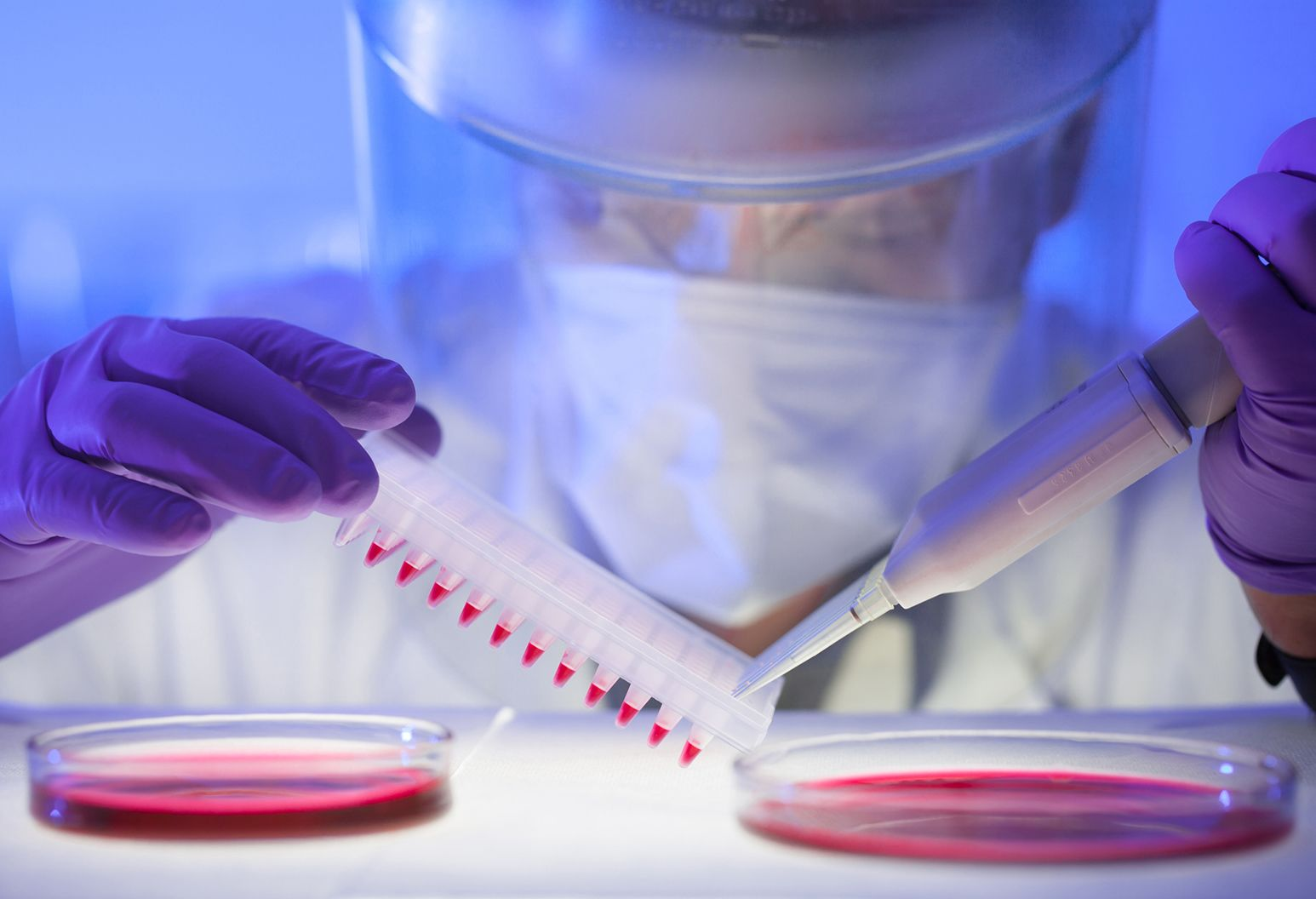 Lab researcher working with petri dishes