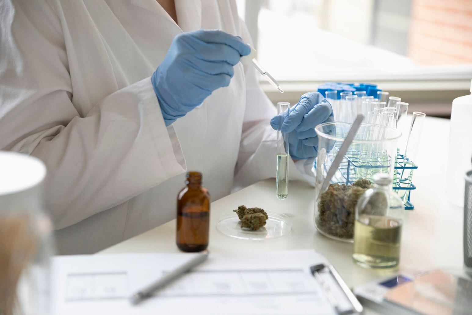 Cannabis being tested in a lab