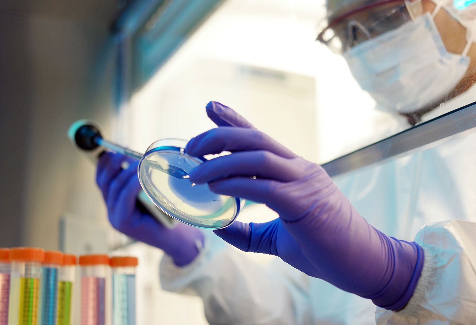 Scientist wearing purple gloves, goggles, and a surgical mask is holding a test tube over a petri dish