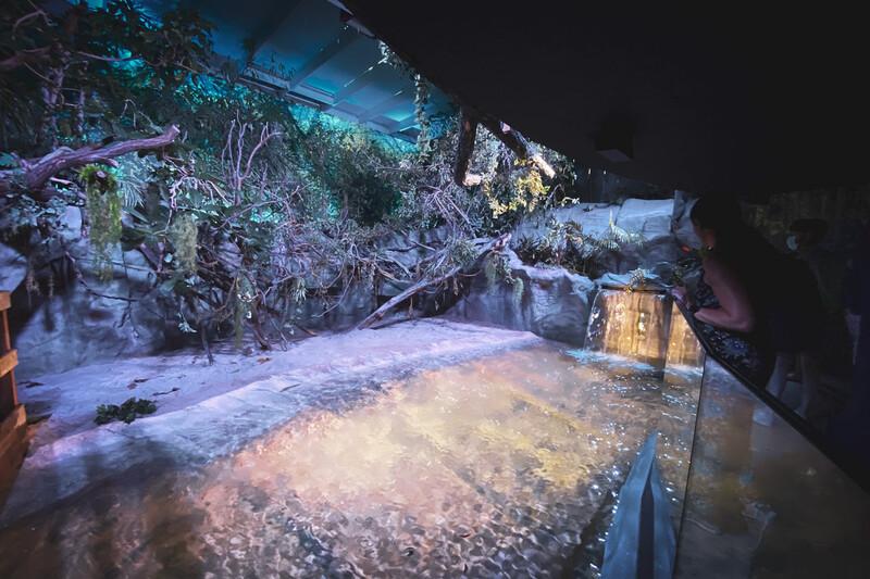 Zoo Antwerpen - Ovation 3