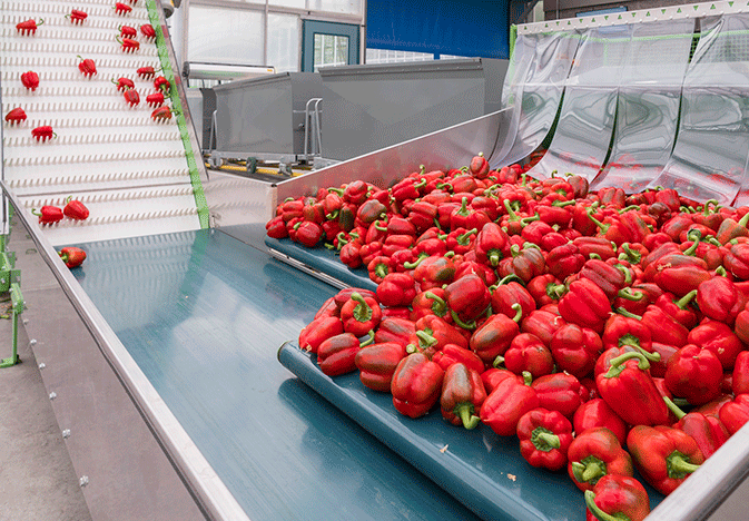 Naturefresh-organic-peppers_WEB