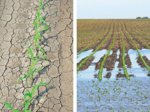 Long-term water management practices include surface and subsurface drainage and variable-rate irrigation. Short-term water management practices include preventing soil compaction and getting soil in shape for planting.