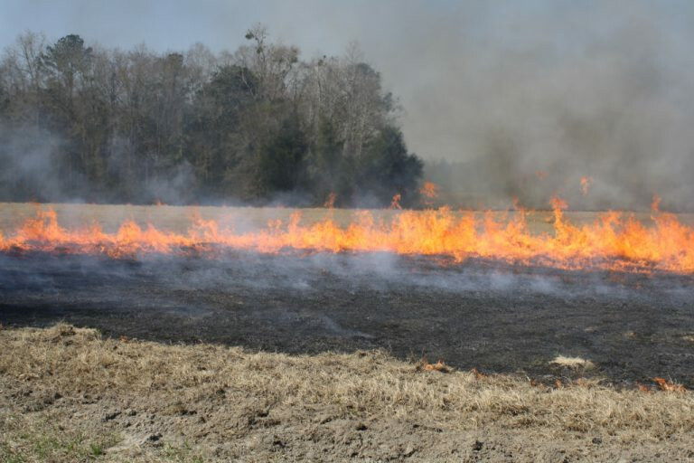 Controled-Burning-Fire-Hayfield-Bermudagrass