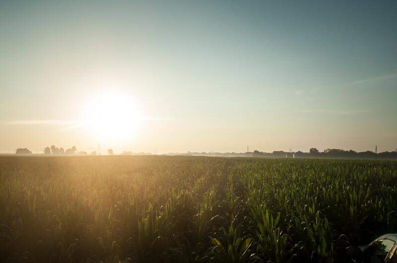 Morning Corn Field in Illinois -1