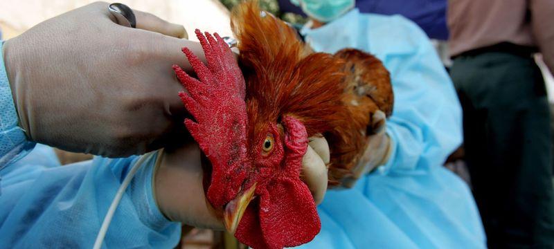 Chicken-UN