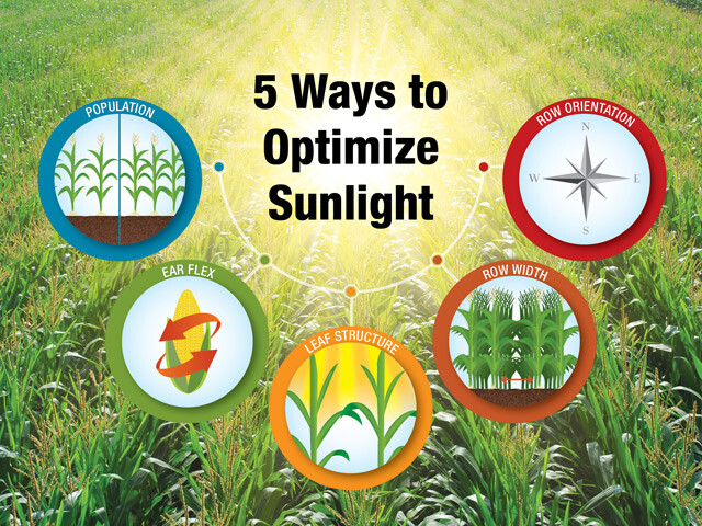 5 Ways to Optimize Sunlight