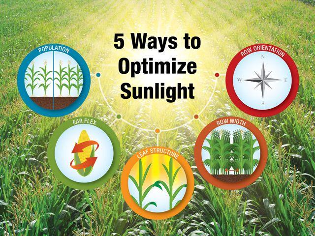 5 Ways to Optimize Sunlight
