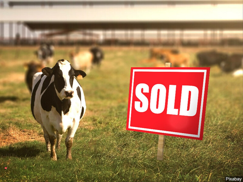 Dairy Sells