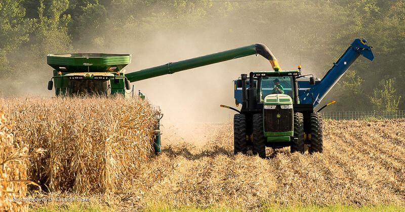 Weihmeir Farm-harvesting corn-22