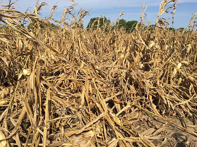 There are few more disheartening sites than a corn field, once full of promise, now lying flat on the ground. This will not only make harvest more difficult, but also put you at risk of leaving bushels in the field.