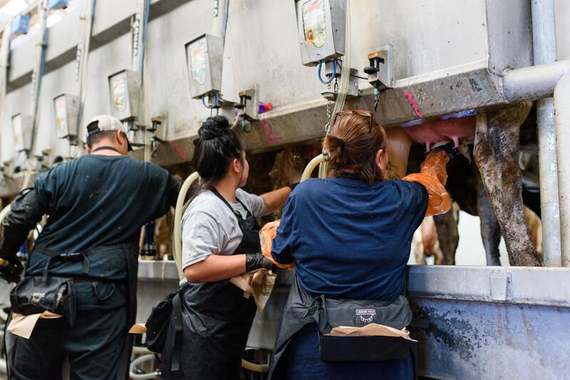 Las Uvas Valley Dairy 20