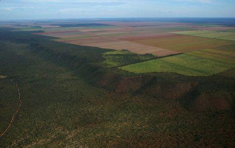Brazil Cerrado savanna