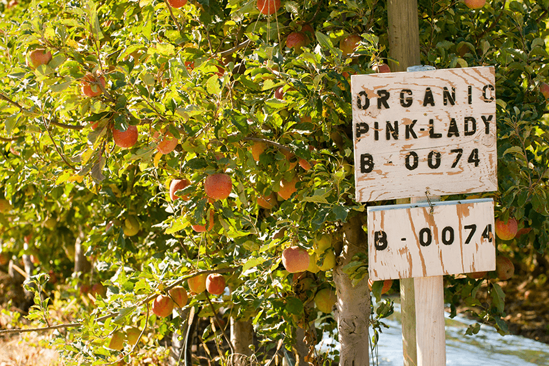 Sales of organic fruit are skyrocketing. Find out what fruits led the category growth and how suppliers are handling that growth.