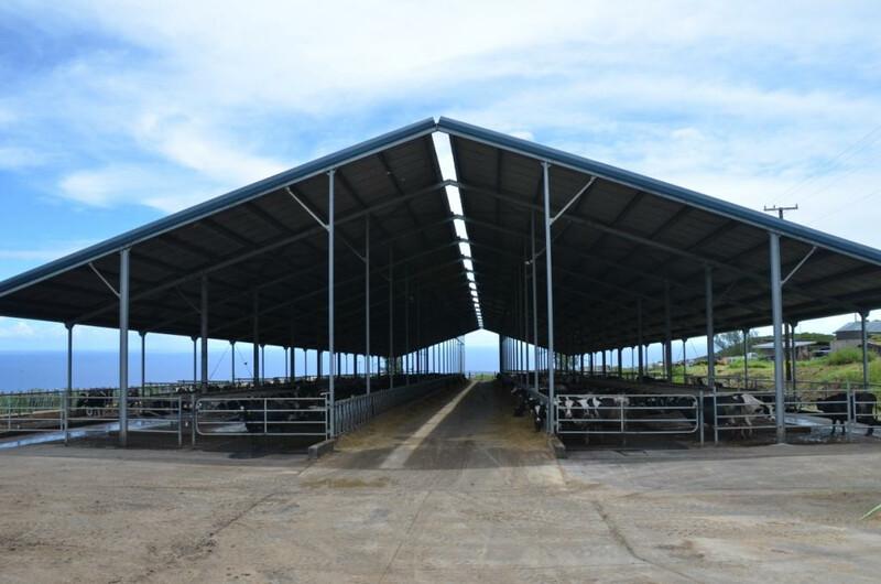 Big Island Dairy Hawaii