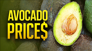 The already-popular avocado is getting a turbo boost from higher supply and lower prices -- and restaurants are eager to cash in.