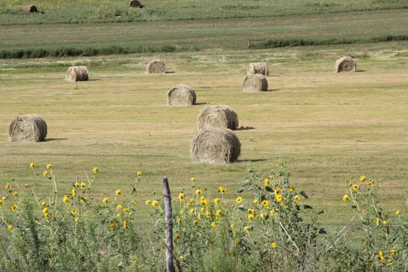 UNL Hay Meadow Bales