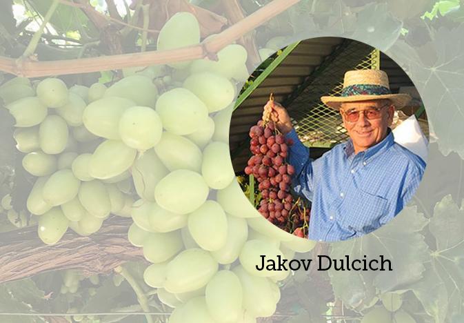 Jakov-Dulcich-Sunlight