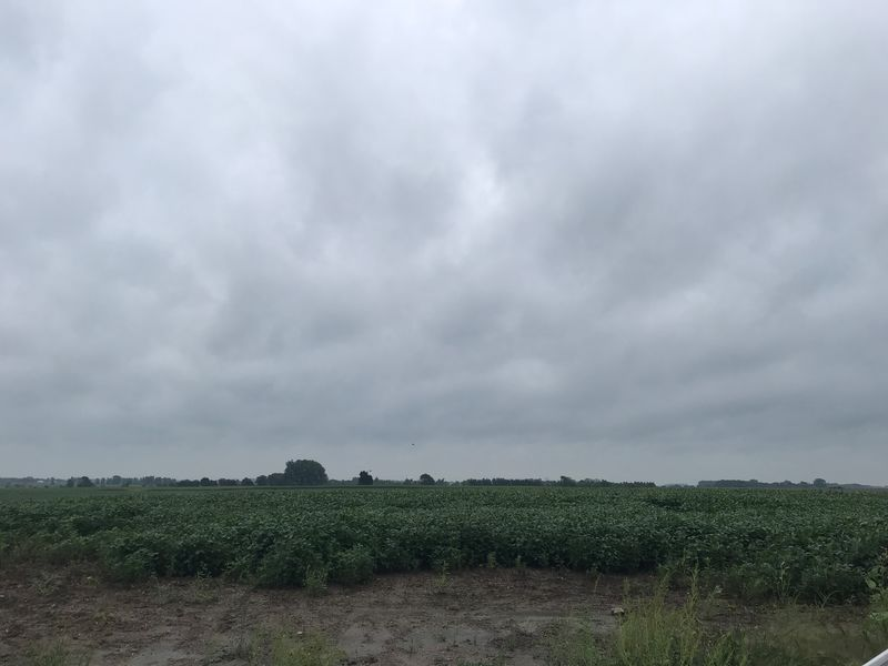 With muddy boots and dirty hands more than 100 Pro Farmer Crop Tour scouts are reporting findings in South Dakota, Nebraska and Ohio. Rain and disease are putting pressure on crops at many stops, leading to variability.