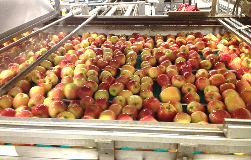 Apples-dv-Washington-packinghouse