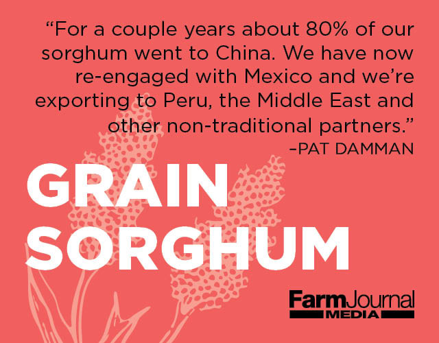 Grain Sorghum Outlook