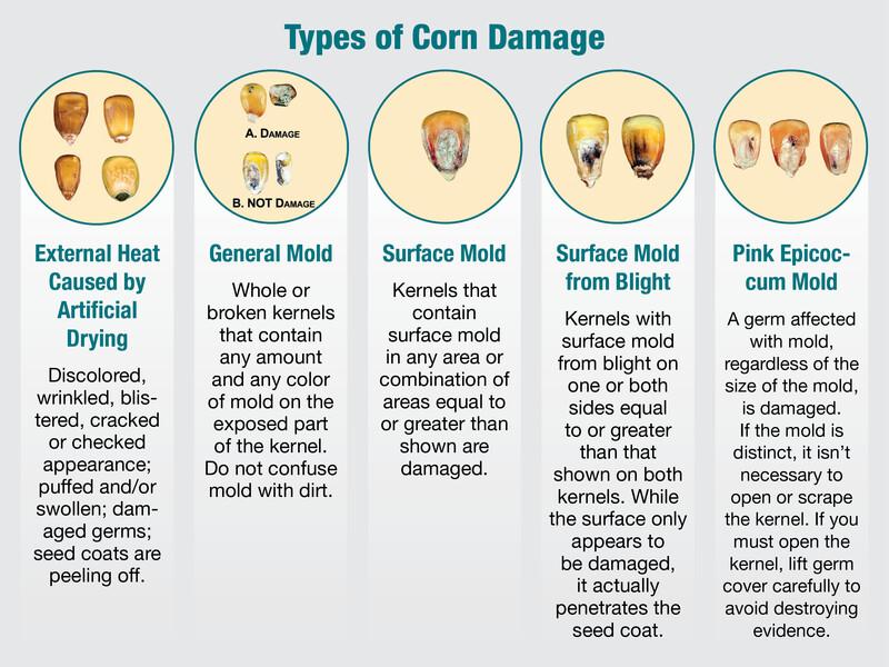 Types of Corn Damage