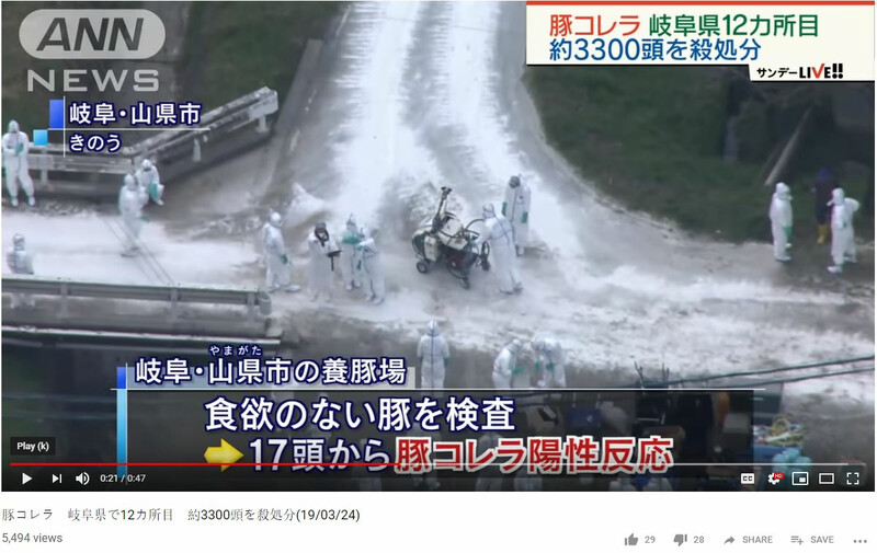 Japan Vaccinates Wild Boars as Classical Swine Fever Outbreaks Continue