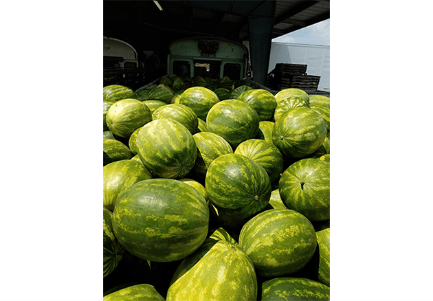 watermelons from Schmieding
