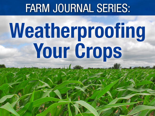 Weatherproofing Your Crops