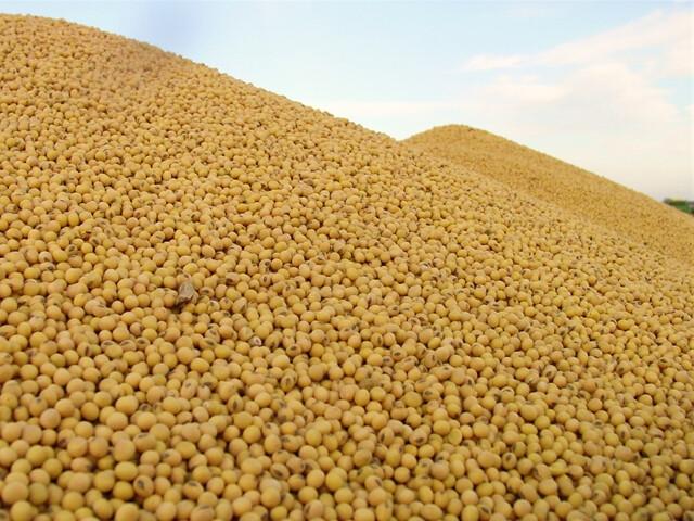 Soybean pile