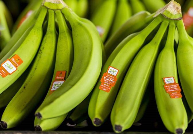 grow-bananas_web