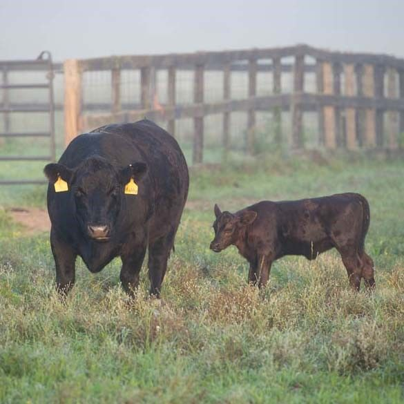 Deficiencies can be hard to detect but are avoidable with complete mineral nutrition.