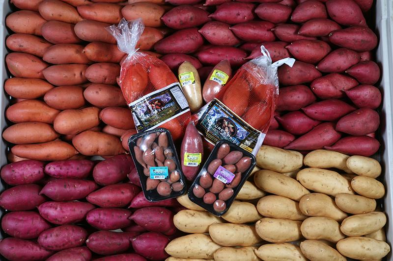 AV-Thomas_sweet-potatoes