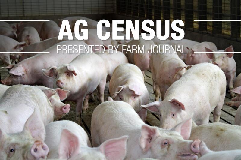 Ag Census Pigs