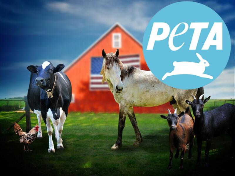 PETA Farm Animals Barn