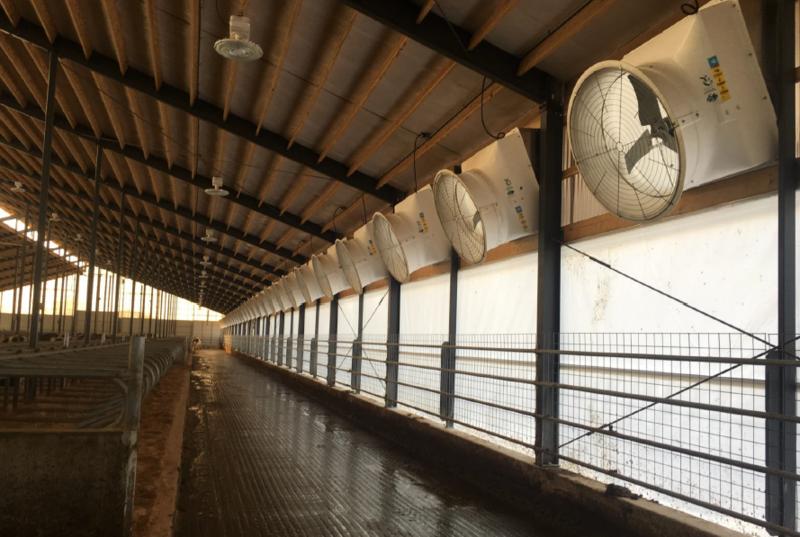 Hybrid Dairy Barn