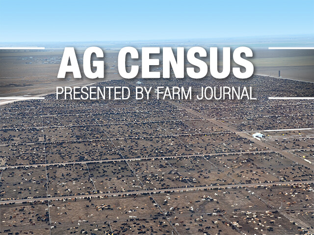 AgCensus_Feedlot_Cattle