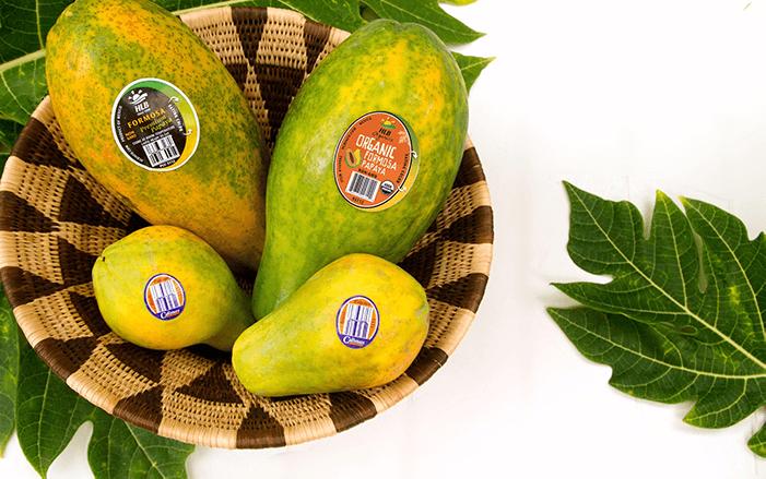 HLB-Papayas