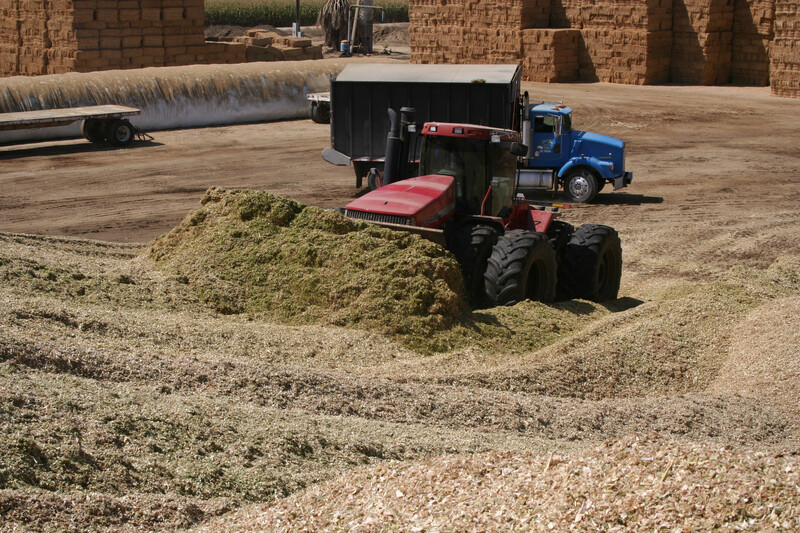 Corn Silage Harvest 162