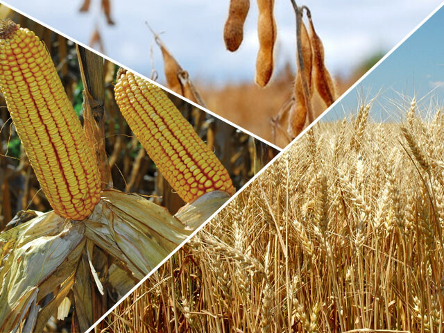 Allendale-Acreage-Survey-Corn-Is-King