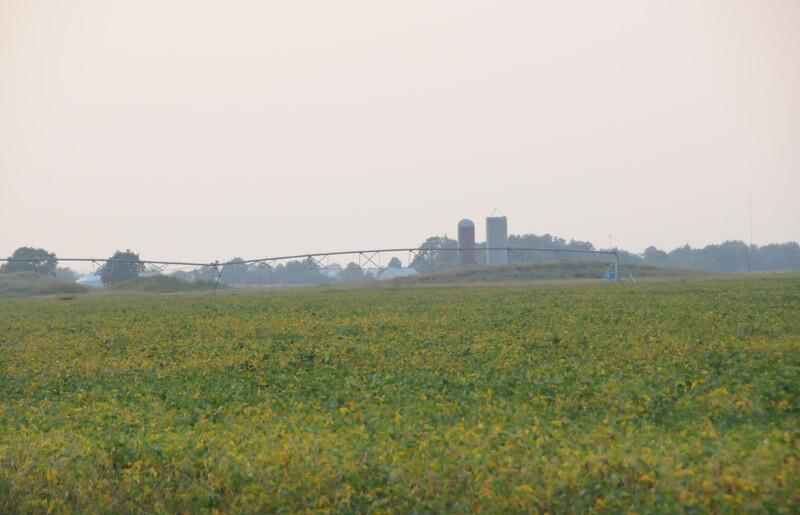 farmland_soybeans (8)