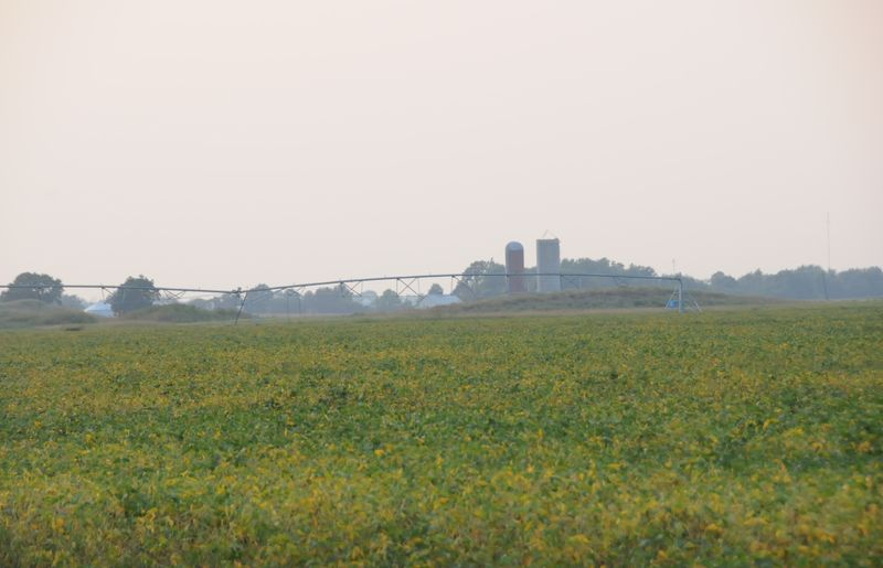 farmland_soybeans (8)