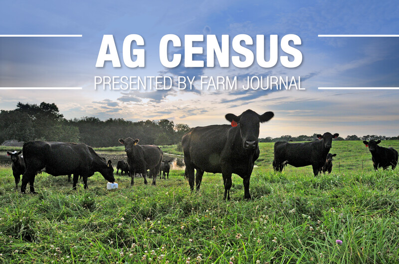 Ag Census Cattle