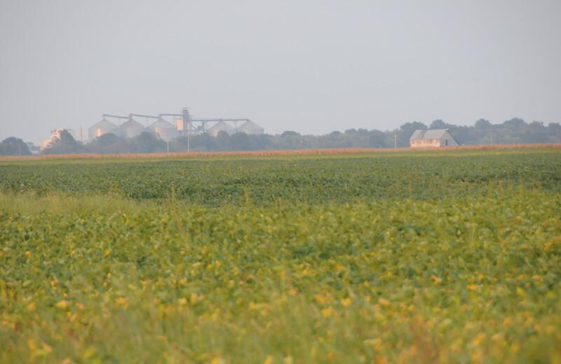 farmland_soybeans (12)