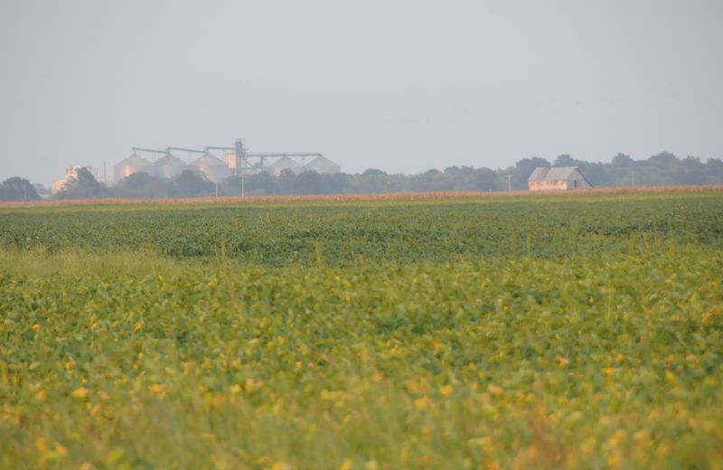 farmland_soybeans (12)