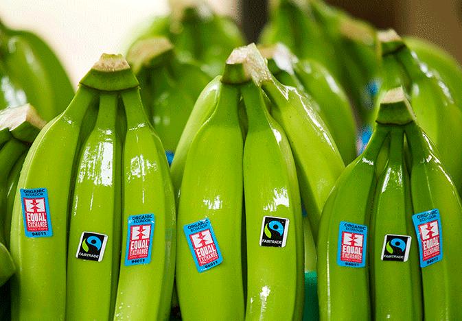 Fairtrade America Equal Exchange bananas