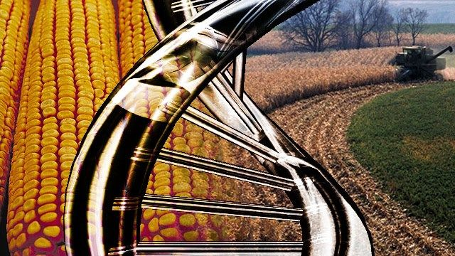 USDA will not seek to regulate gene editing technologies.