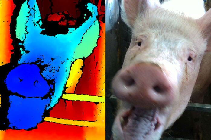 Facial recognition technology aims to assess the emotional state of pigs