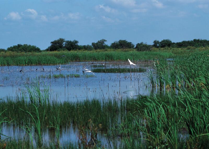 NRCS_Iowa_wetland